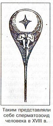 prichini-nezrelogo-hromatina-spermatozoida