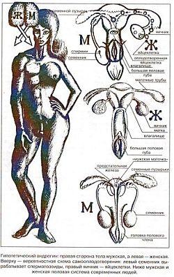 Мекс двуполых гермафрадитов