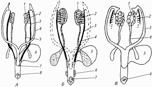 Женские половые органы в разных позах фото 569-63
