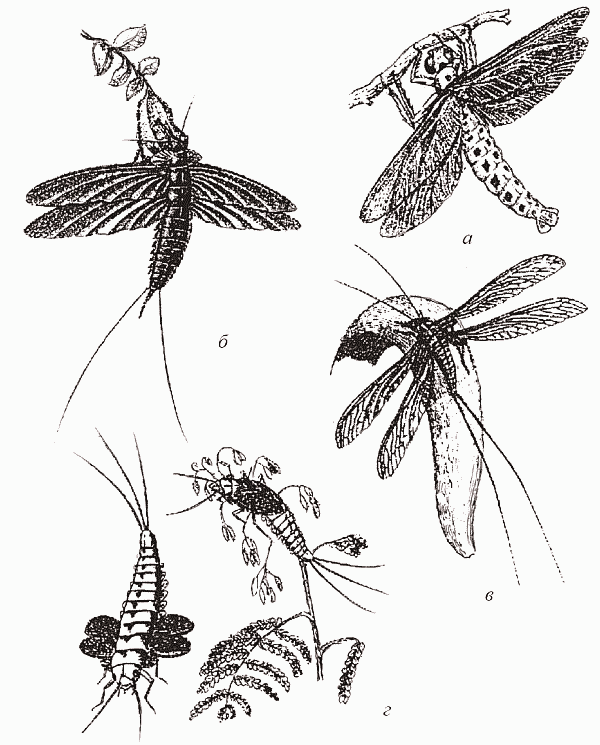 а — стрекоза подотряда