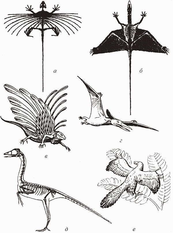 Завоевание воздуха рептилиями: