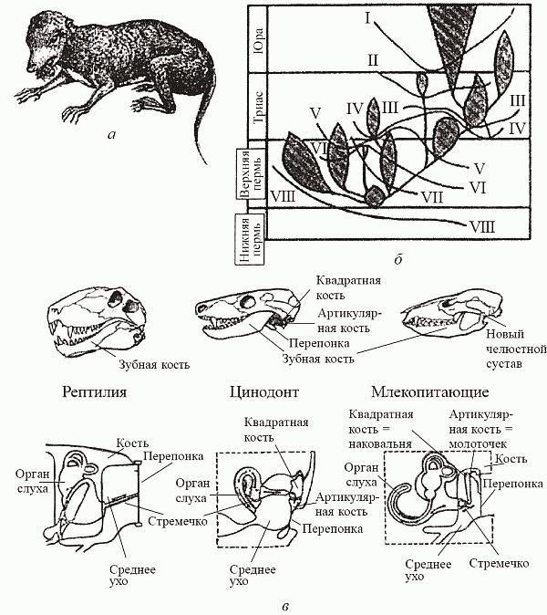 Происхождение млекопитающих