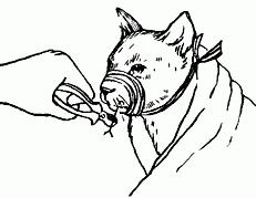 5 Первая помощь заболевшей кошке / Ветеринарный справочник для ...