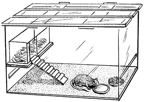 Клетка для морской свинки своими руками чертежи