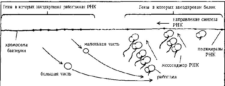 Часть II / ГЕДЕЛЬ, ЭШЕР,