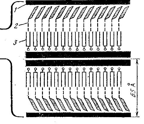 Схема строения граны